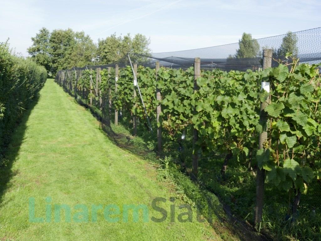ochrona winorośli, siatka na krzewy